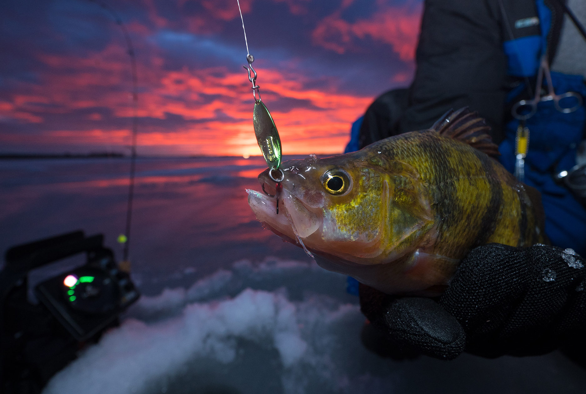 Perch fishing guide North South Dakota